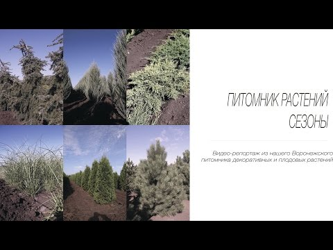 Растения Московской , Калужской и Тульской области