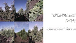 видео Питомник декоративных растений в Московской области