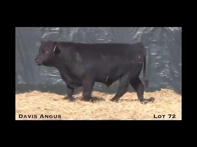Davis Angus Lot 72
