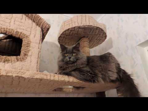 Игровой комплекс для кота своими руками. Дом - когтеточка.