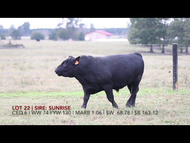 Edgewood Angus Lot 22
