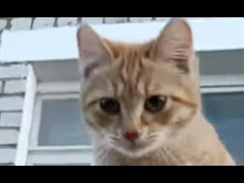 Рыжик пыжик где ты был 😻 умный котенок