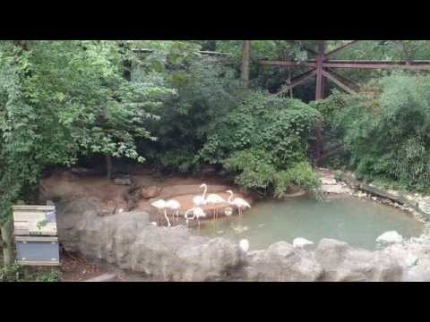 Cincinnati Zoo | USA Travel Tourism | Ohio Attractions | Thing To Do In Cincinnati # 1