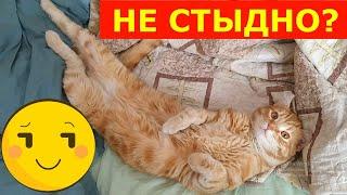 Короткое видео про кота.Рыжий кот.short Video.cat