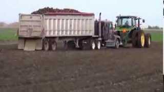 Sugar Beet harvest in Minnesota 2013