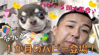 番組提供:ペットライン株式会社 http://www.petline.co.jp/ 久しぶりに...