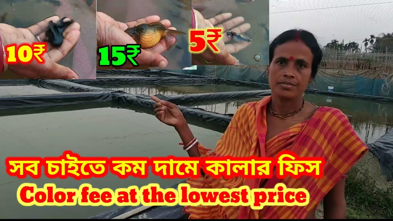 GOLDFISH FISH FARMING in HOWRAH AMTA🐕HOWRAH FISH FARMING AND SELLING 🐕ONMENTAL FISH FARMING