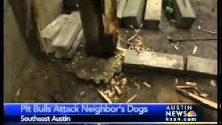 kxan pack of pit bulls chew through fence attack 2 dogs