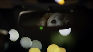 Subaru Dog Tested | Subaru Commercial | Puppy thumbnail