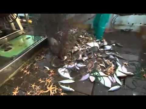 Fukushima Fallout Ruins Fisheries