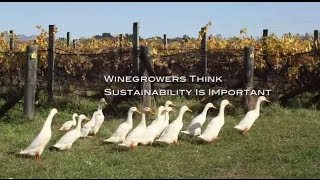 Why is sustainability important? New Zealand Wine
