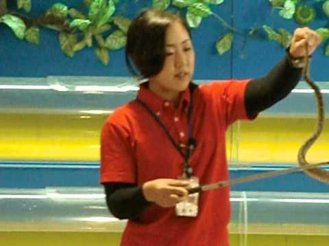 トーク全開! ハブ VS マングースショー (おきなわワールド) - Habu VS Mongoose Show Okinawaworld -