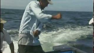 Trinidad and Tobago: Fish Kills