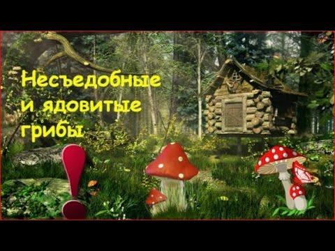 Несъедобные и ядовитые грибы
