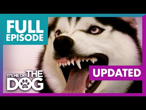 The Demon Husky UPDATED | Full Episode + Commentary | It's Me or the Dog