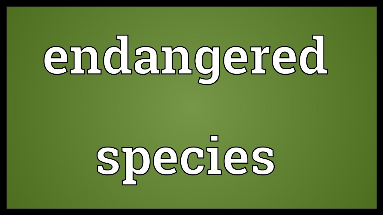 Endangered species Meaning