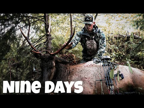 Roosevelt Elk Hunting Washington | Archery 2019