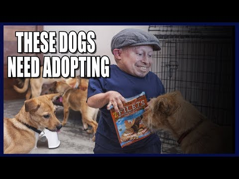Saving Dogs From The Asian Dog Meat Trade! (Emotional) thumbnail