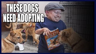 Saving Dogs From The Asian Dog Meat Trade! (Emotional)
