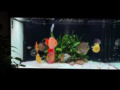 My Discus Collection 2020 October