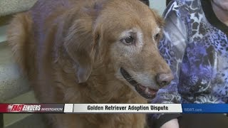 Golden Retriever Adoption Dispute