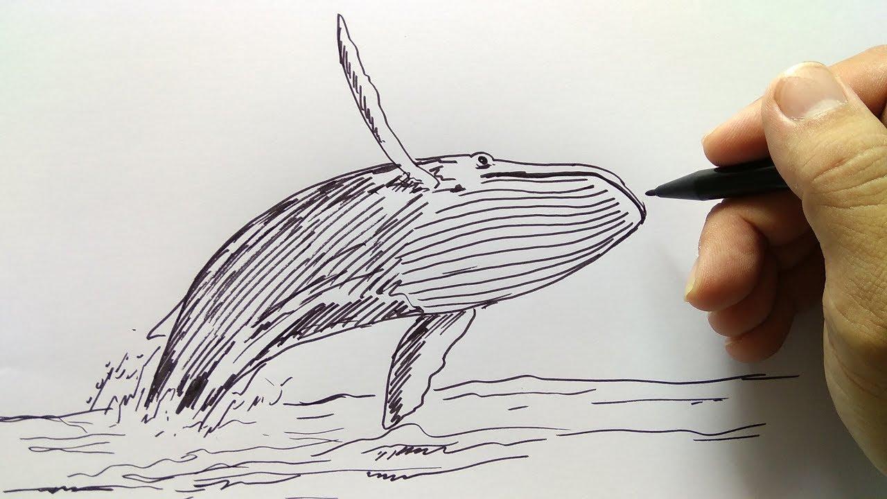 cara menggambar ikan paus melompat