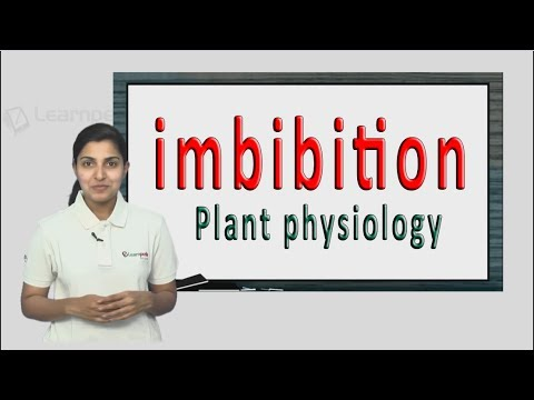 Imbibition explained in a simple manner with a example. NEET Botany  XI Plant physiology