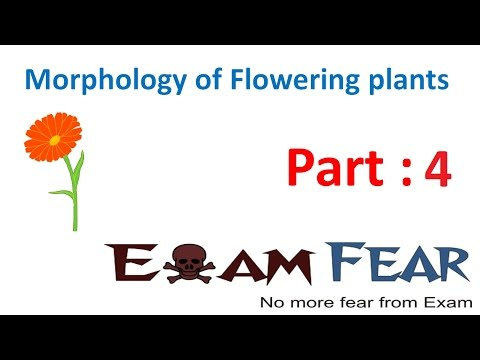 Biology Morphology of Flowering Plants part 4 (Root parts) CBSE class 11  XI