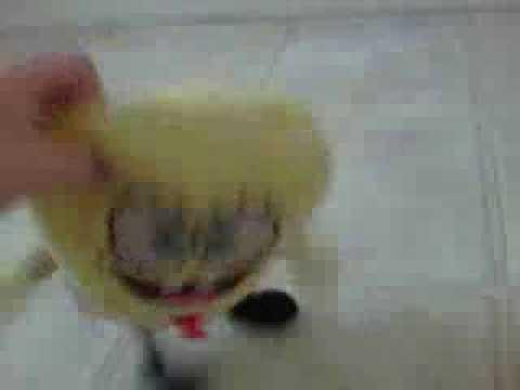SpongeBob Sings Musical Doodle