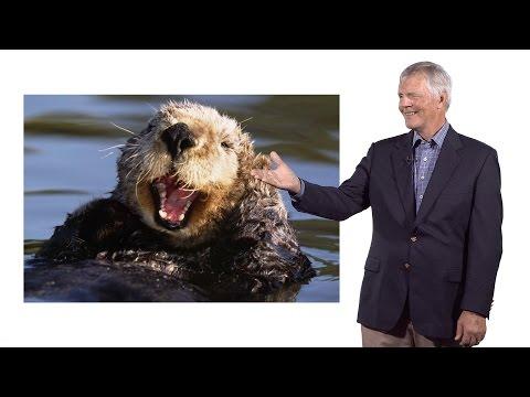 James Estes (UC Santa Cruz) 2: Apex Predators: Sea Otters and Kelp Forests