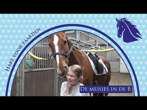 Tessa start in de B op Verona * Hart voor Paarden *