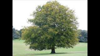 Arbor Day Video