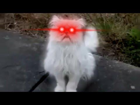 Kucing Marah mp4