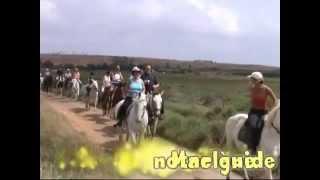 Promenade à cheval LE PONT VERT à PALAVAS LES FLOTS