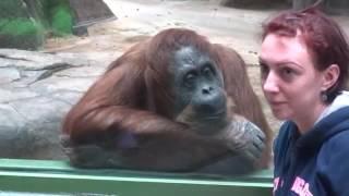 Новинка - 2016.  Смешные животные ,обезьяны наблюдают за людьми
