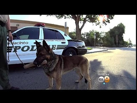 Suspect Stands Off With SWAT After Killing Police Dog