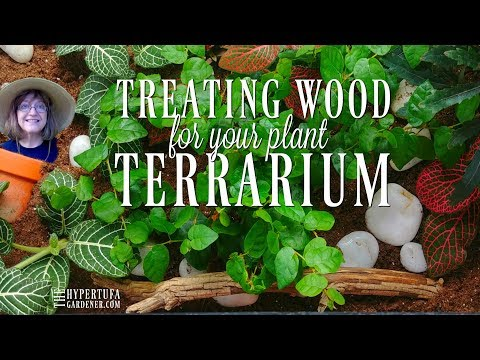 Gather Some Branches & Make Wood For Your Terrarium! DIY Terrarium Wood