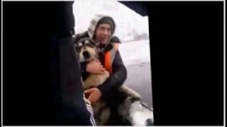 Карельские дорожники спасли собаку из ледяного озера