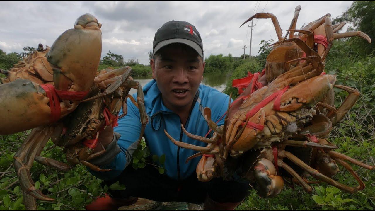 半年前,刀仔在虾塘放下蟹苗,今天过来全是大膏蟹,抓爆桶了