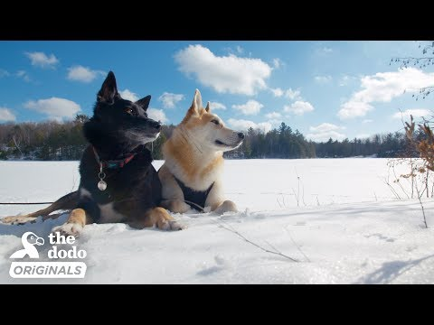Dog Nobody Wanted Gets The Perfect Adventure Family | The Dodo Destination: Firsts
