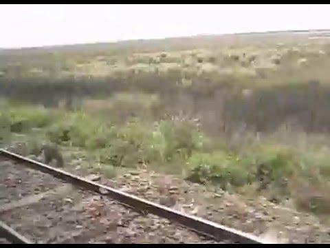 Tren Bala Argentina