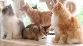 Video JAPAN DAY 8: MOCHA CAT CAFE AND AKIHABARA download MP3, 3GP, MP4, WEBM, AVI, FLV September 2018