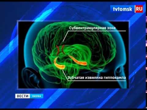 Томские учёные ищут метод полного восстановления мозга после инсульта