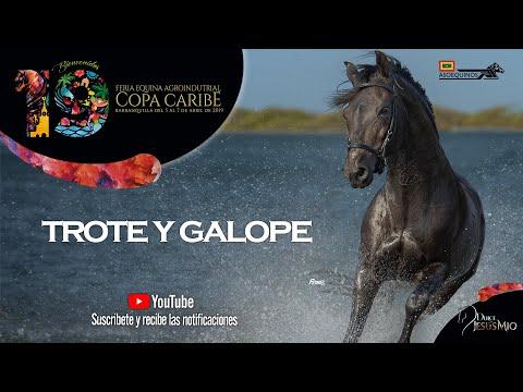 POTRANCAS DE 36 A 48 -  TROTE Y GALOPE - COPA CARIBE BARRANQUILLA 2019