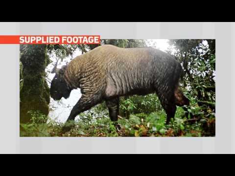 mitv - Hkakabo Razi: Officials Talk To List The Landscape In Natural WHS