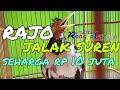 Jalak Suren Jinak Suara Mewah  Mp3 - Mp4 Download