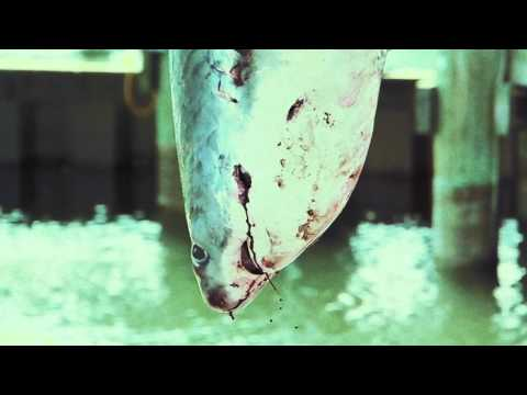 The Shark-Free Marina Initiative - Celebrity PSA