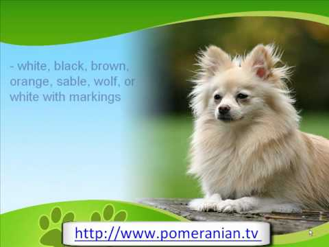 pomeranian history pomeranian history and information youtube 1734