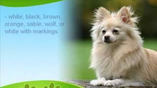 Pomeranian History and Information