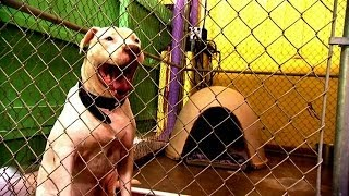 Working Behind the Camera at Villalobos | Pit Bulls and Parolees